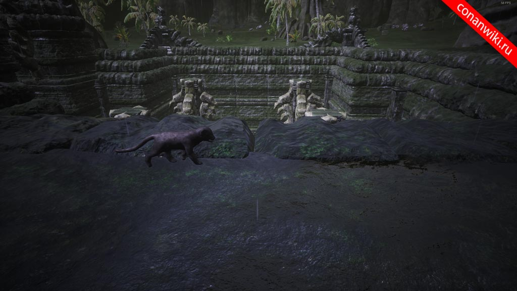 Найти детёныша пантеры