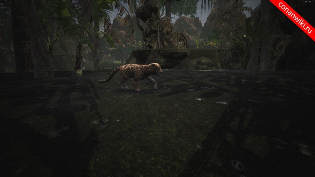 Найти-детёныша-ягуара