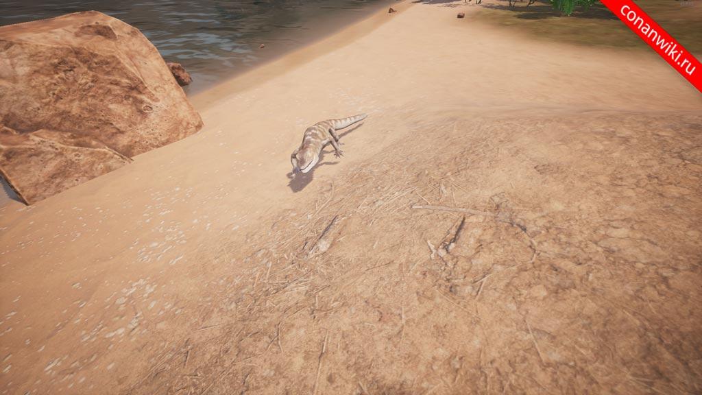 Найти-крокодильчика