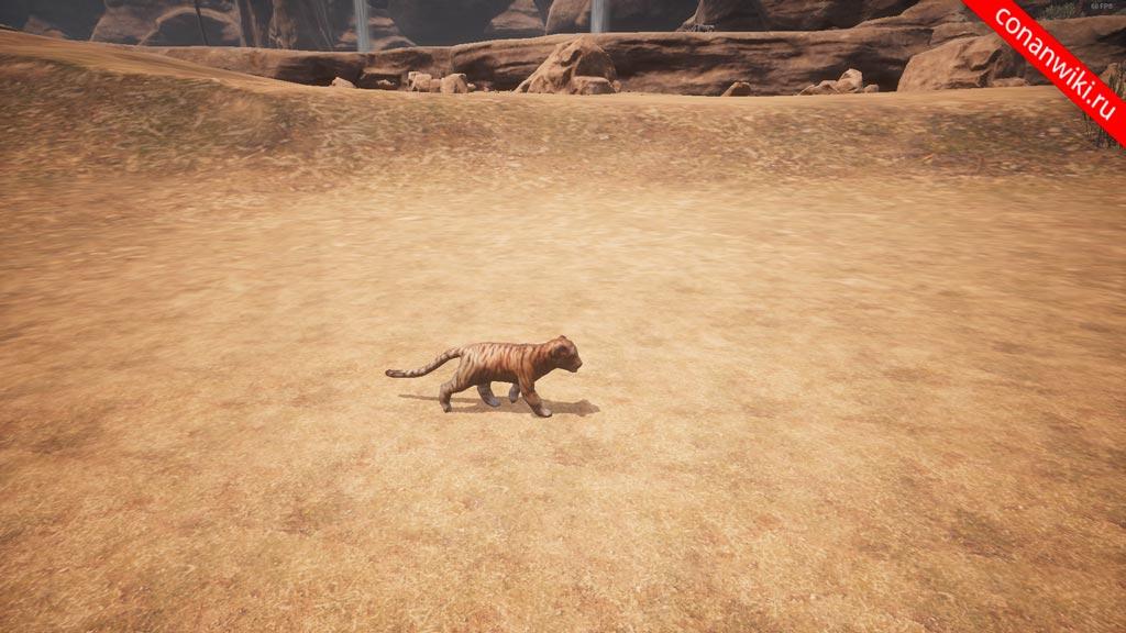Найти-тигрёнка